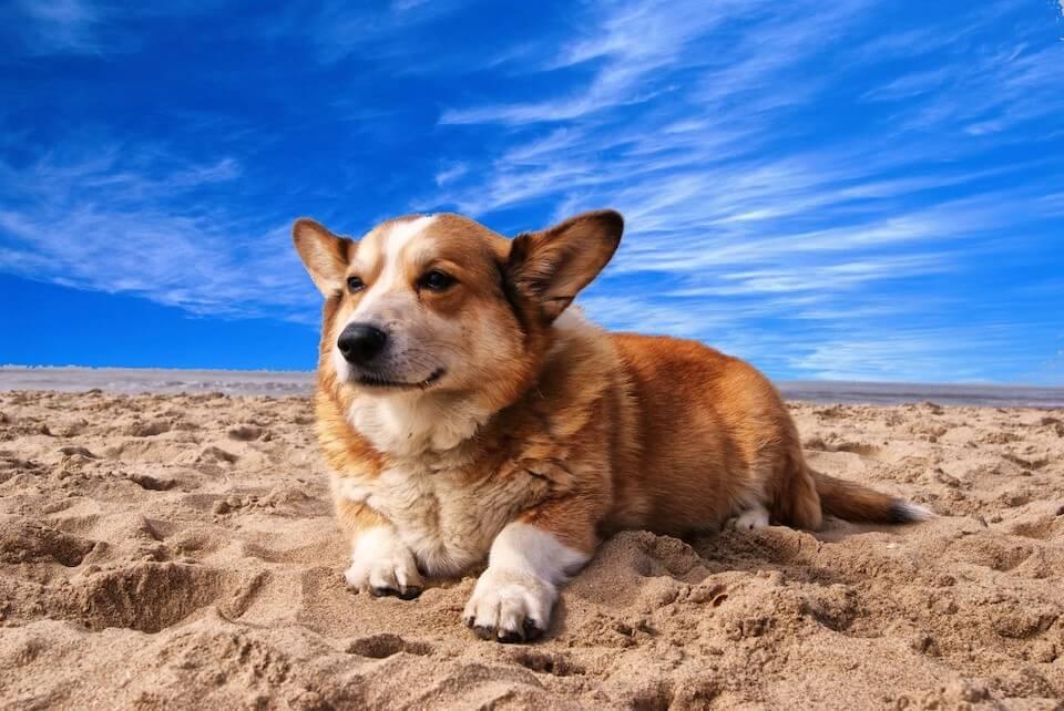 Les assurances recommandées pour partir en voyage avec son chien