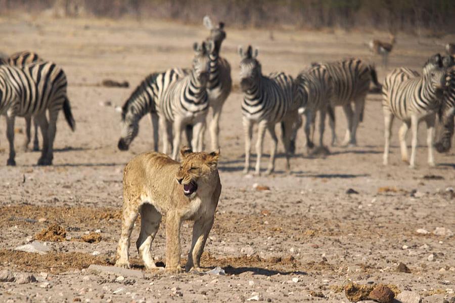 Safari en Namibie : où vivre des expériences exceptionnelles ?