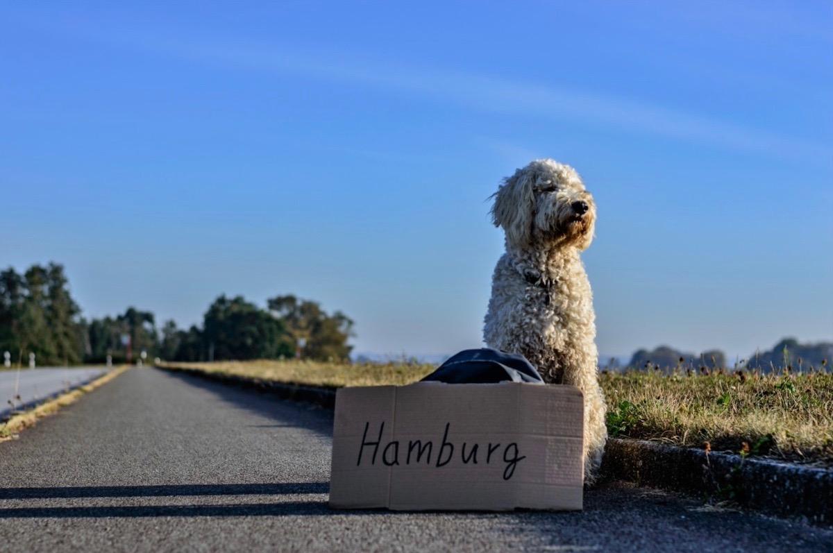 5 conseils pour voyager avec son chien